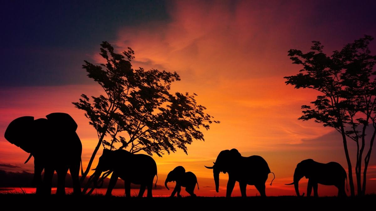 elephant-2231690